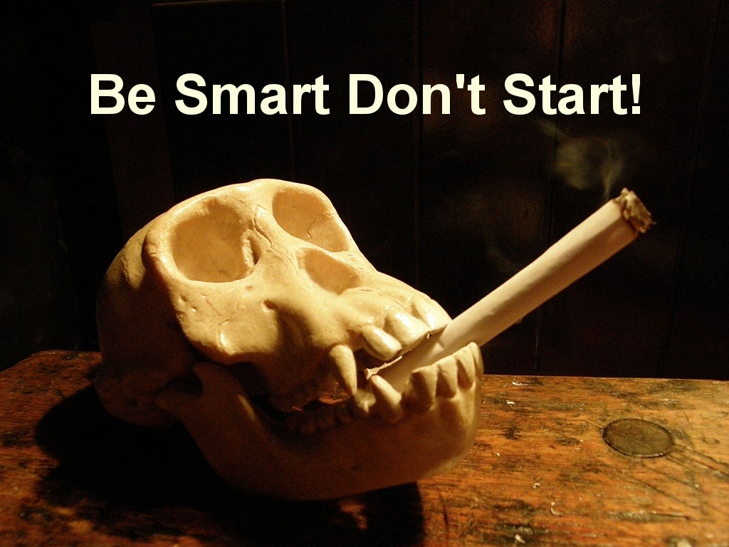 be smart dont start essay Most importantly, the title—even a short one—can give readers a lot of context about an essay good essay titles not only identify the essay's subject, but they.